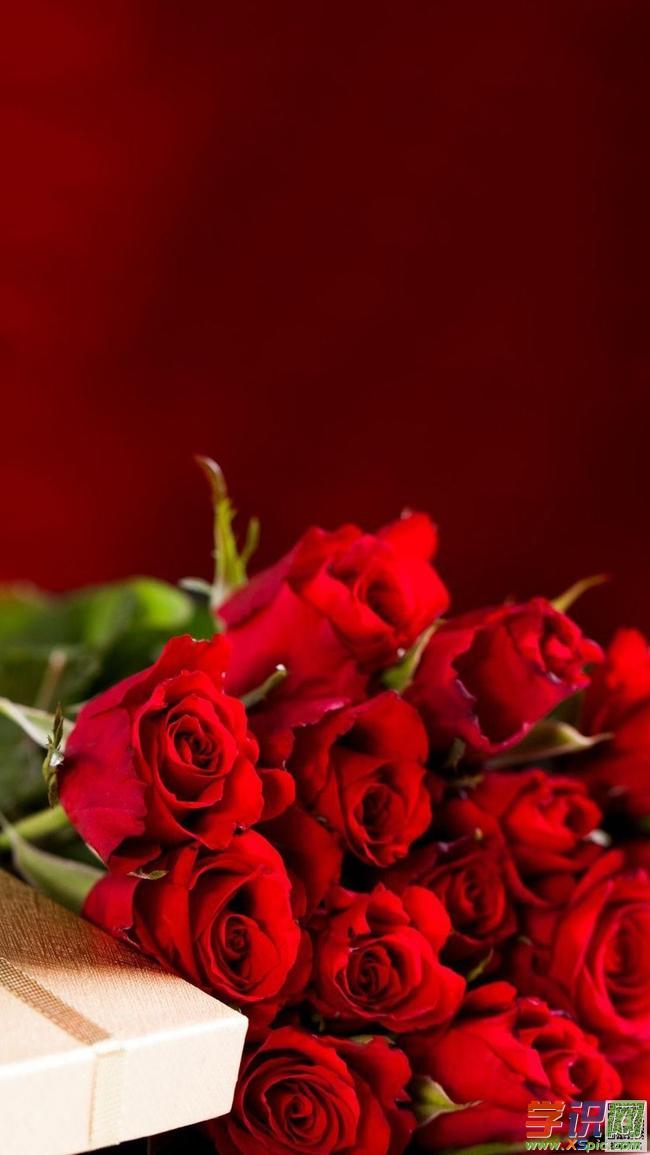 高清手机壁纸竖版图片  3.好看的玫瑰花高清壁纸  4.
