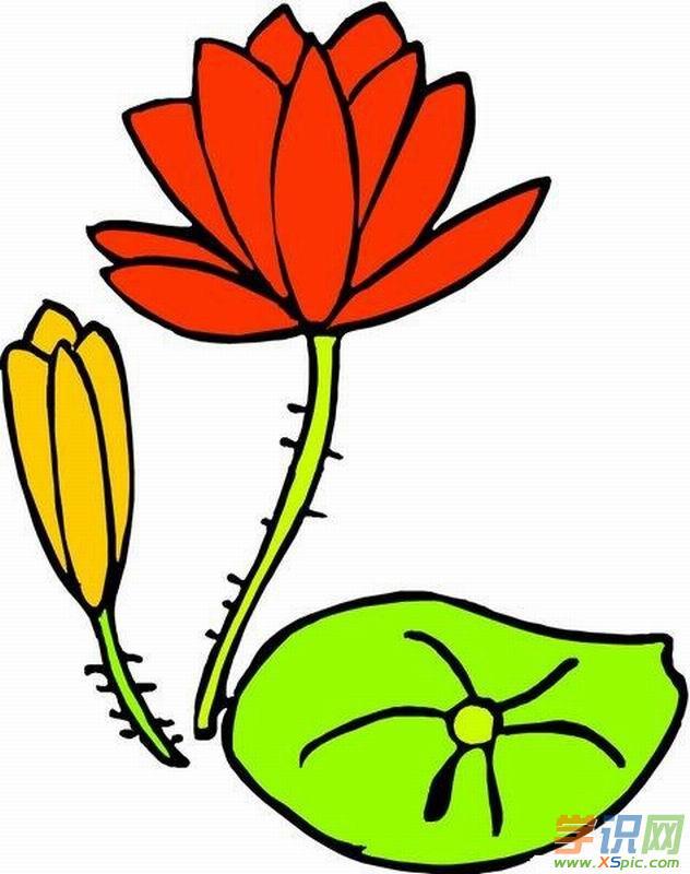 小学生植物简笔画图片展示   关于花卉的故事    玫瑰花    玫瑰