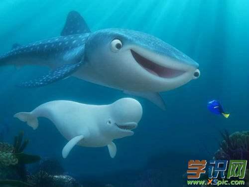 海洋动物画图集