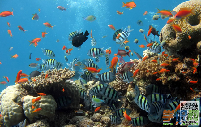 关于游览的澳门葡京网址:海底世界