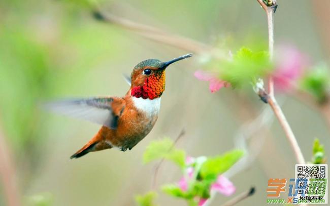 关于动物的澳门葡京网址:放飞小鸟