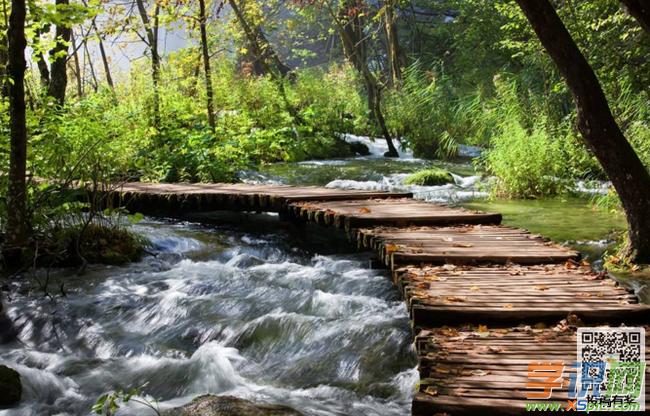 描写小溪的作文:我爱你,家乡的野山溪