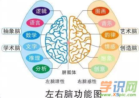 左脑和右脑的区别是什么