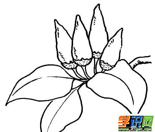如何畫辣椒的簡筆畫