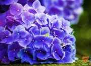 花朵桌面壁纸高清图片