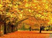 描写秋天的拟人句
