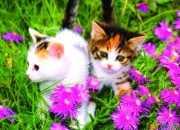 描写小猫的作文100字_写小猫的优秀作文100字