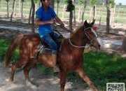 新手学骑马的方法和建议分享