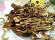 茶树菇的功效与作用