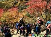 第一次登山的小学日记