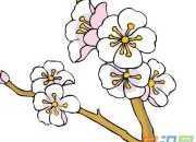 桃花的绘画图片