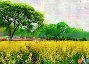 春天的一幅風景畫